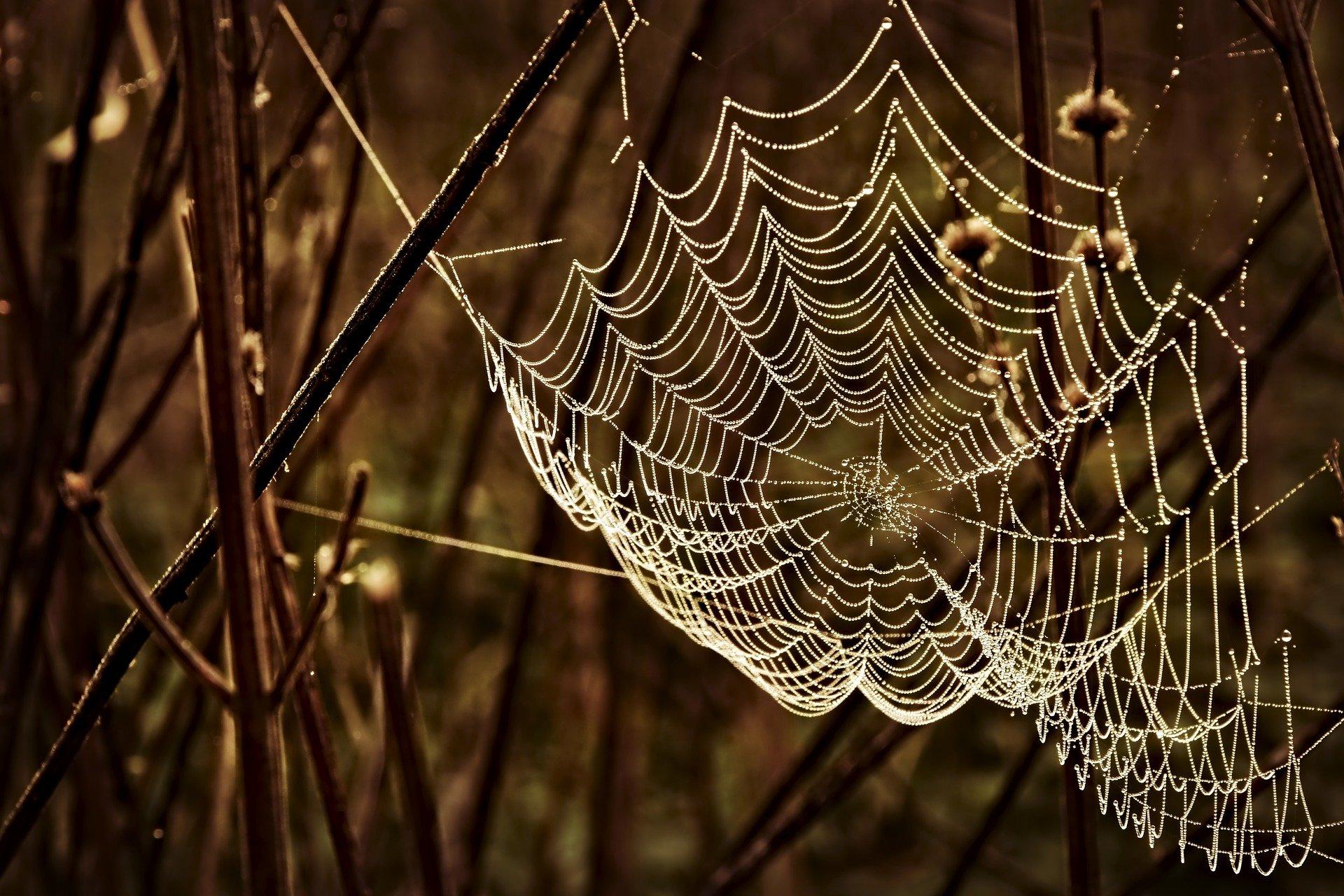 Spinnennetz Altweibersommer